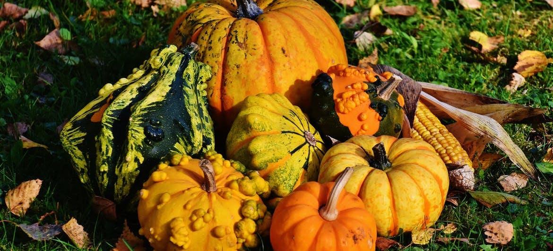 Pumpkins.jpeg